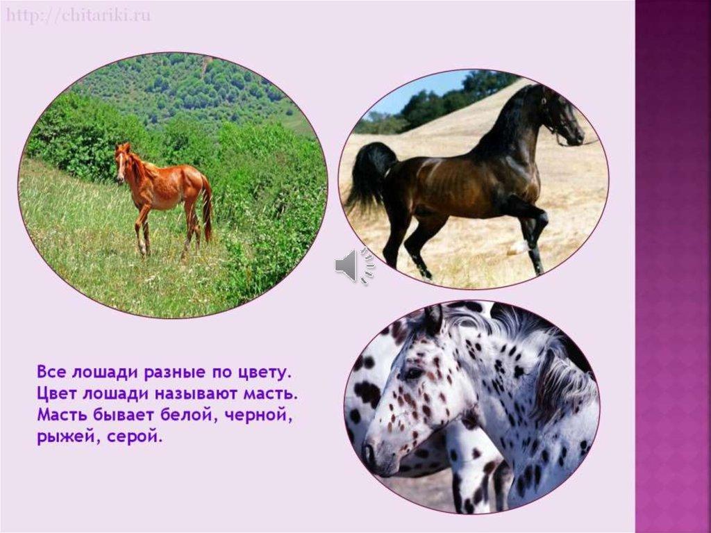 картинки слайды о лошадях продаже загородных