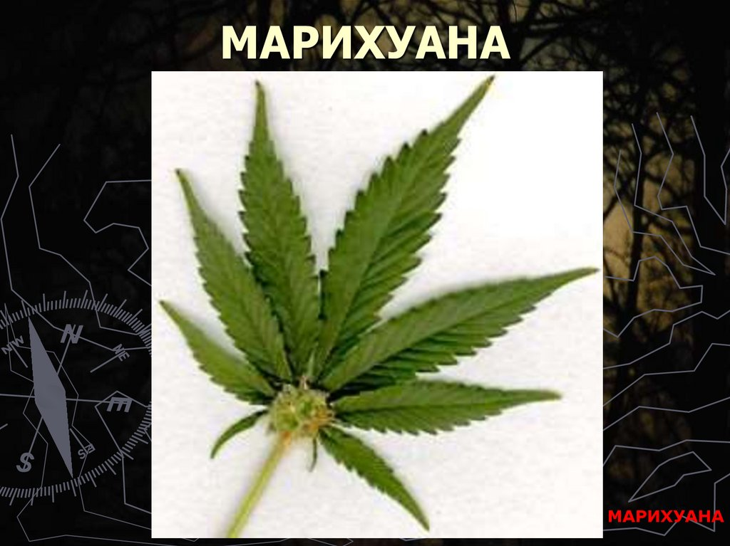 Марихуана наркомания конский бальзам с коноплей