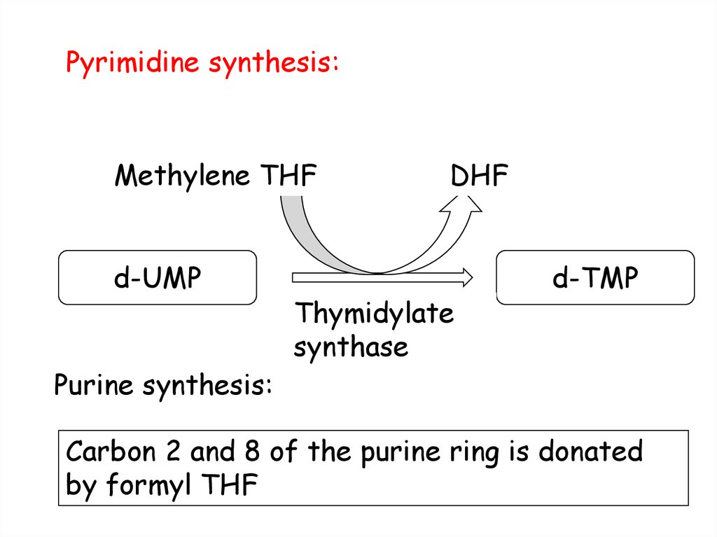 Pyrimidine synthesis: