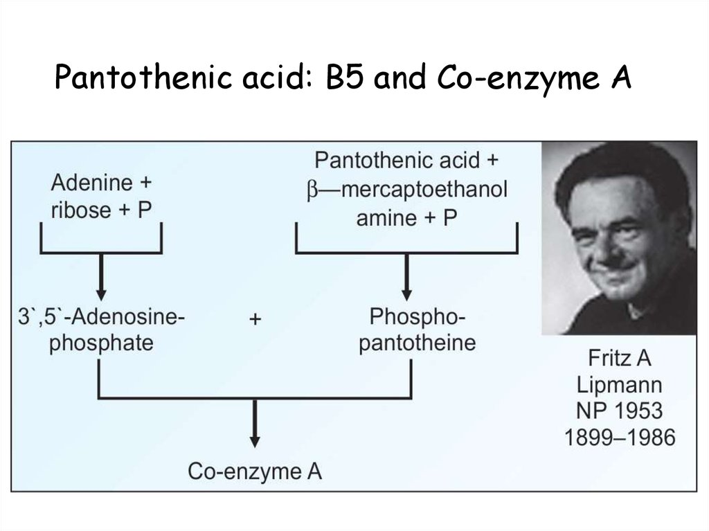 Pantothenic acid: B5 and Co-enzyme A