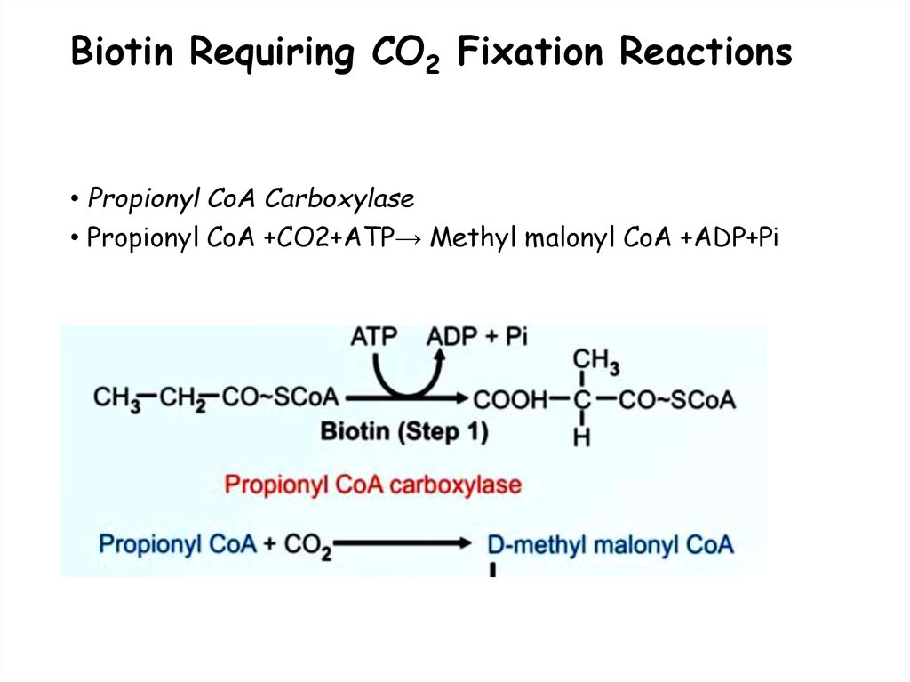 Biotin Requiring CO2 Fixation Reactions