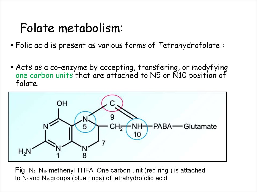 Folate metabolism: