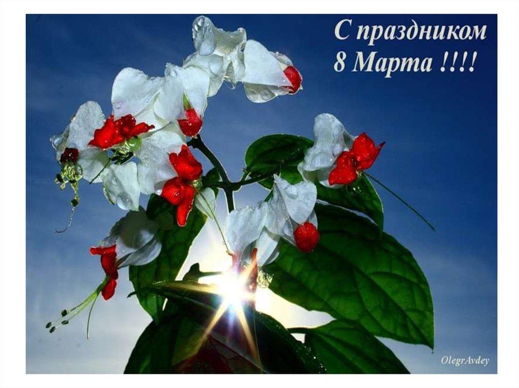 Картинки дню, открытки с 8 марта фото цветы для друзей