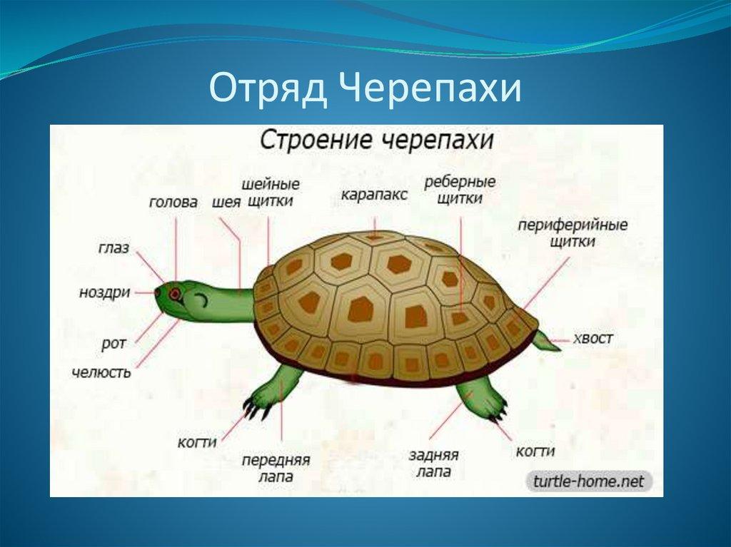 новогодние рассказ о черепах с картинками проект реализуется