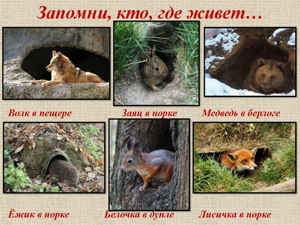 Картинка дикие животные и их жилища