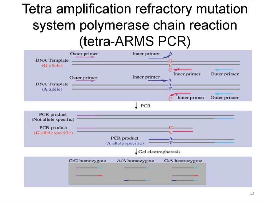Tetra amplification refractory mutation system polymerase chain reaction (tetra-ARMS PCR)