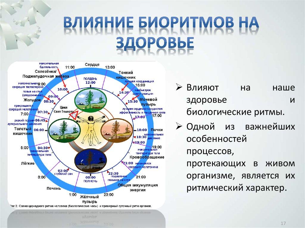 Картинки биологические ритмы организмов