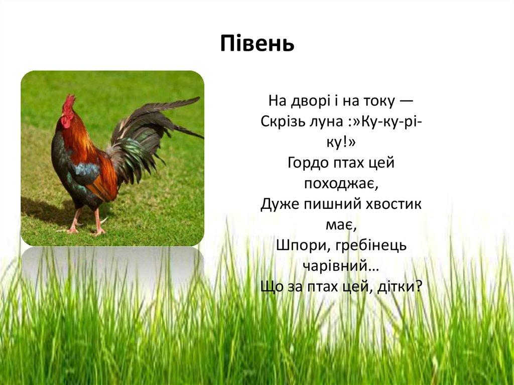 Свійські птахи - презентация онлайн