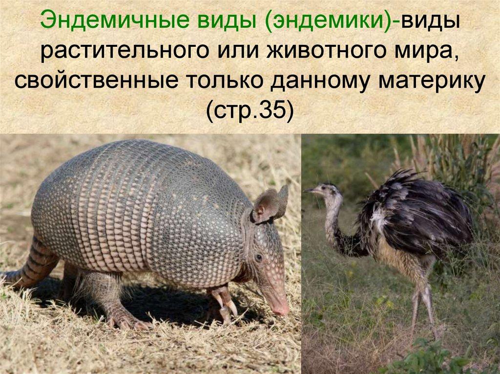 фотоаппарат эндемики россии животные и растения наличие