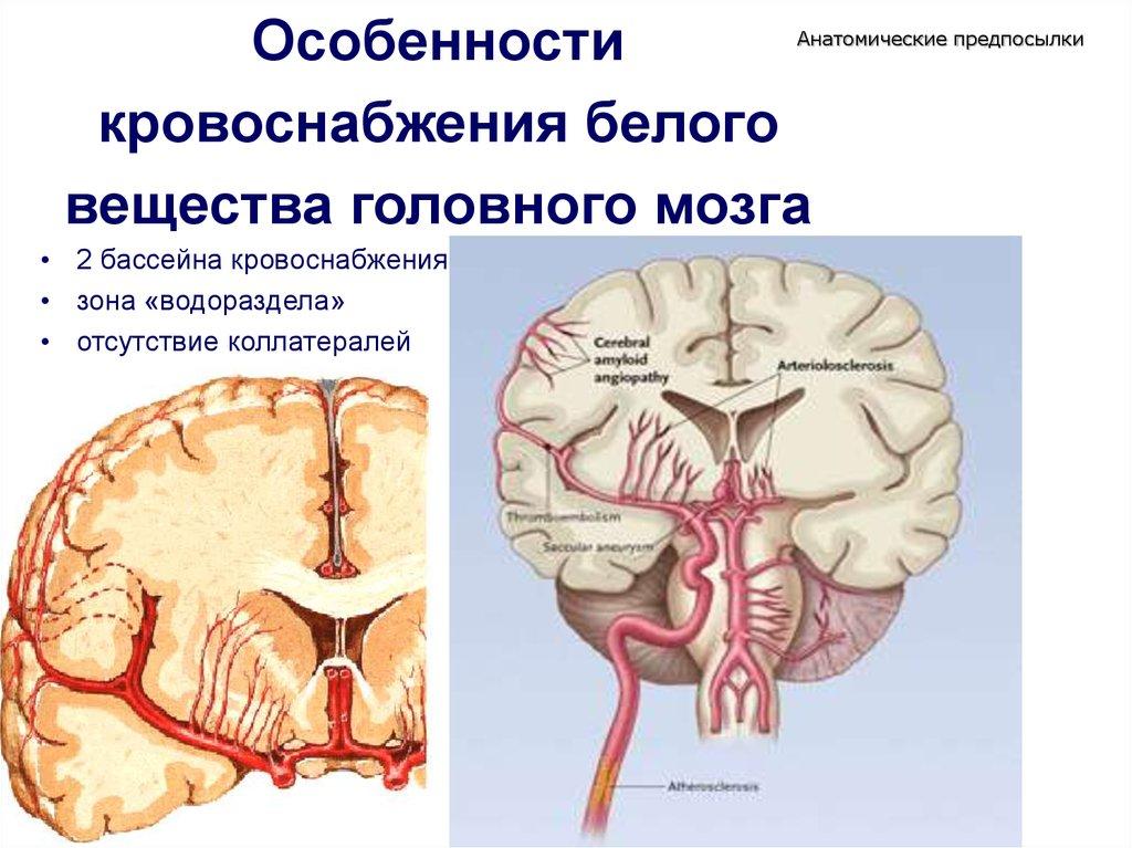 Хроническая ишемия головного мозга: симптомы в зависимости ...