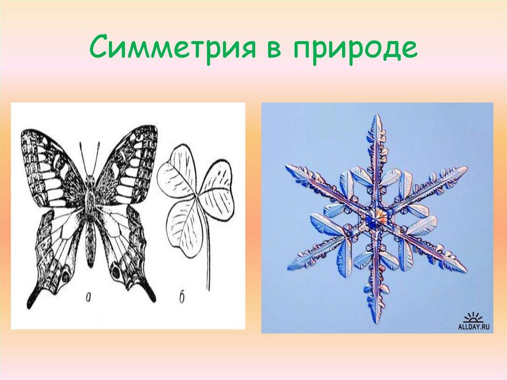 только картинки симметрия в природе поздравления