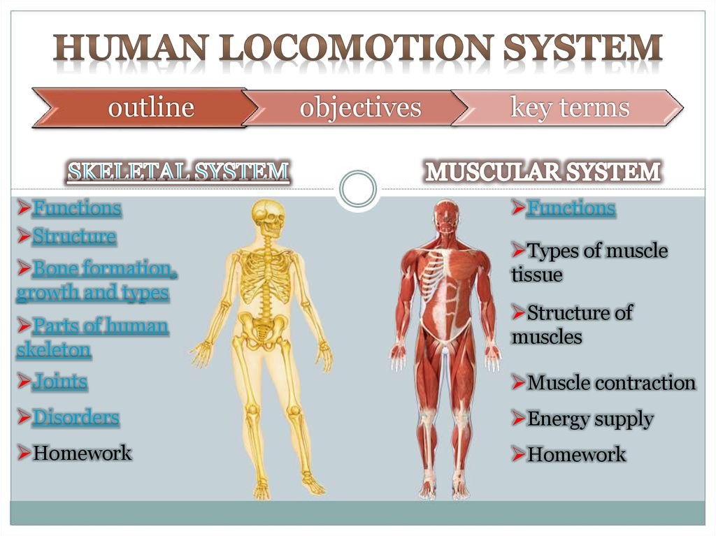 HUMAN LOCOMOTION SYSTEM