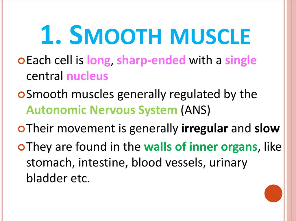 1. Smooth muscle
