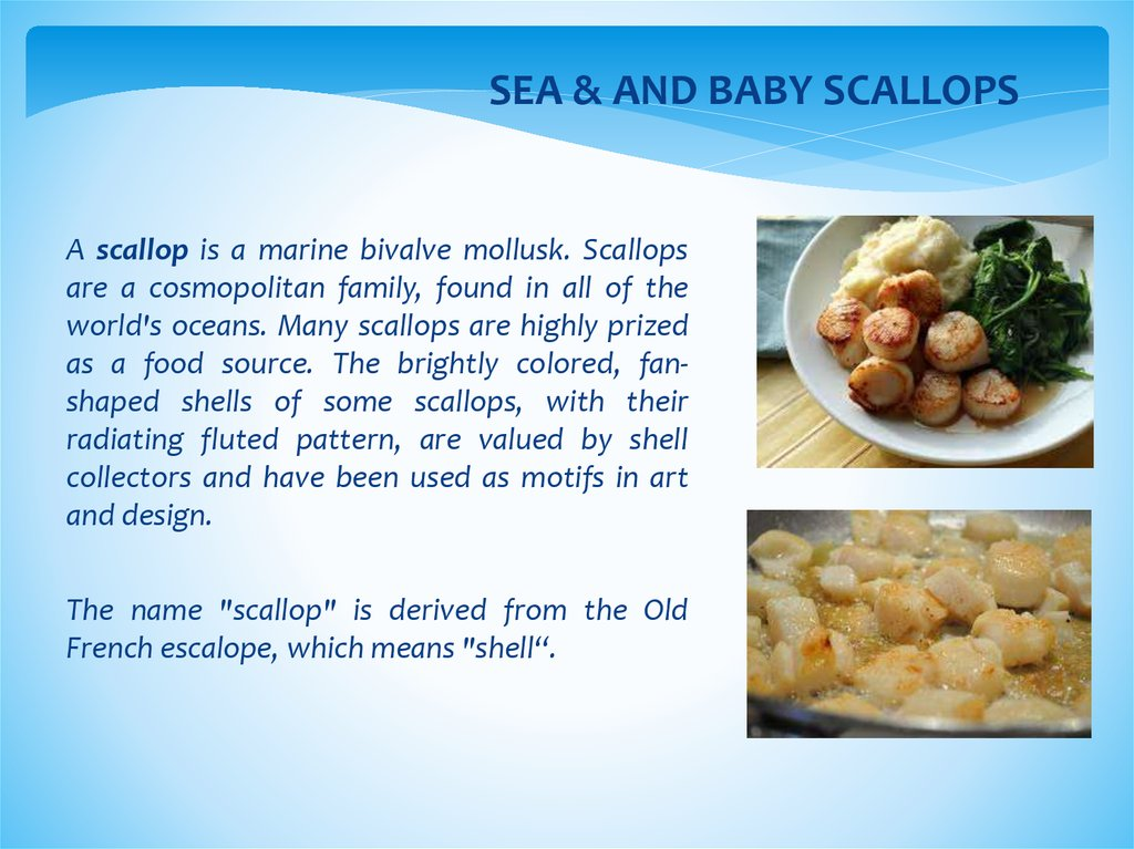 SEA & AND BABY SCALLOPS