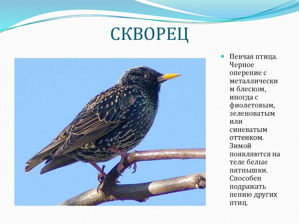 Картинка человек летит на птице список самых