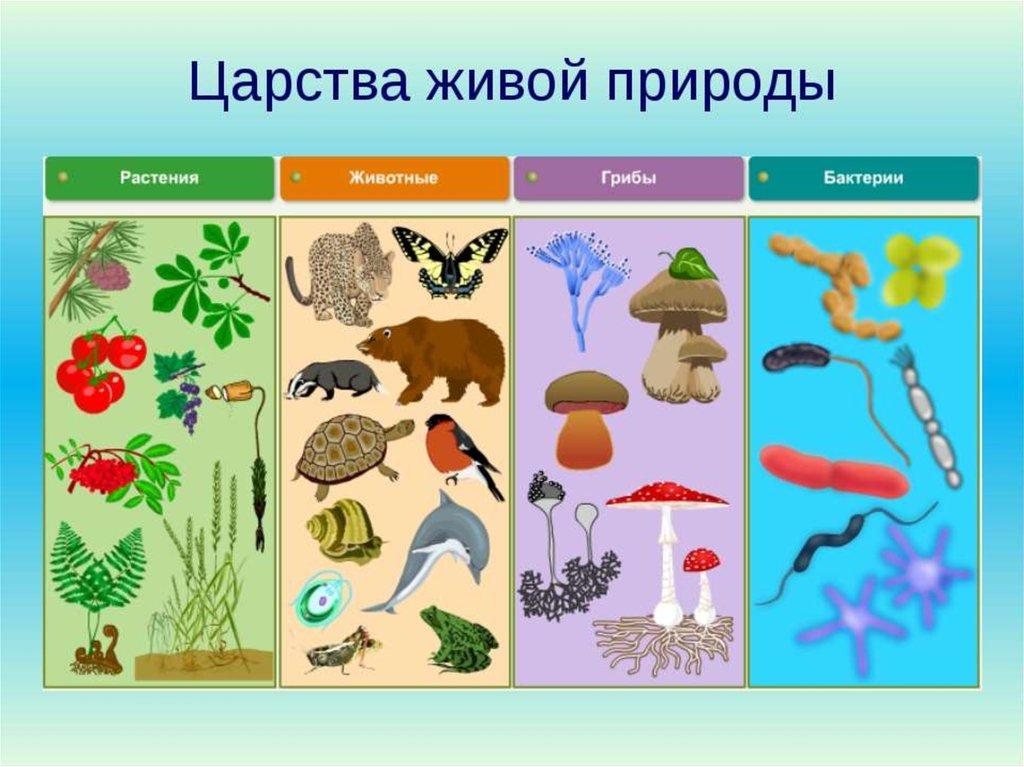 другая биология животные растения картинки с названиями всей души