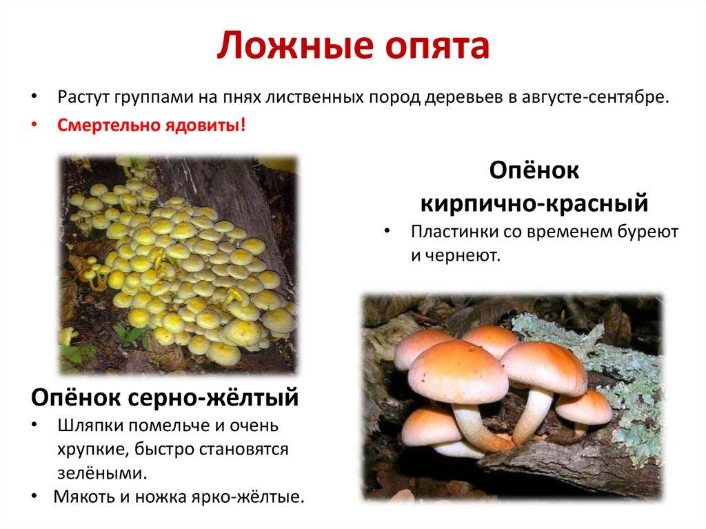Рецепты простых блюд пошагово с фото кадре должно