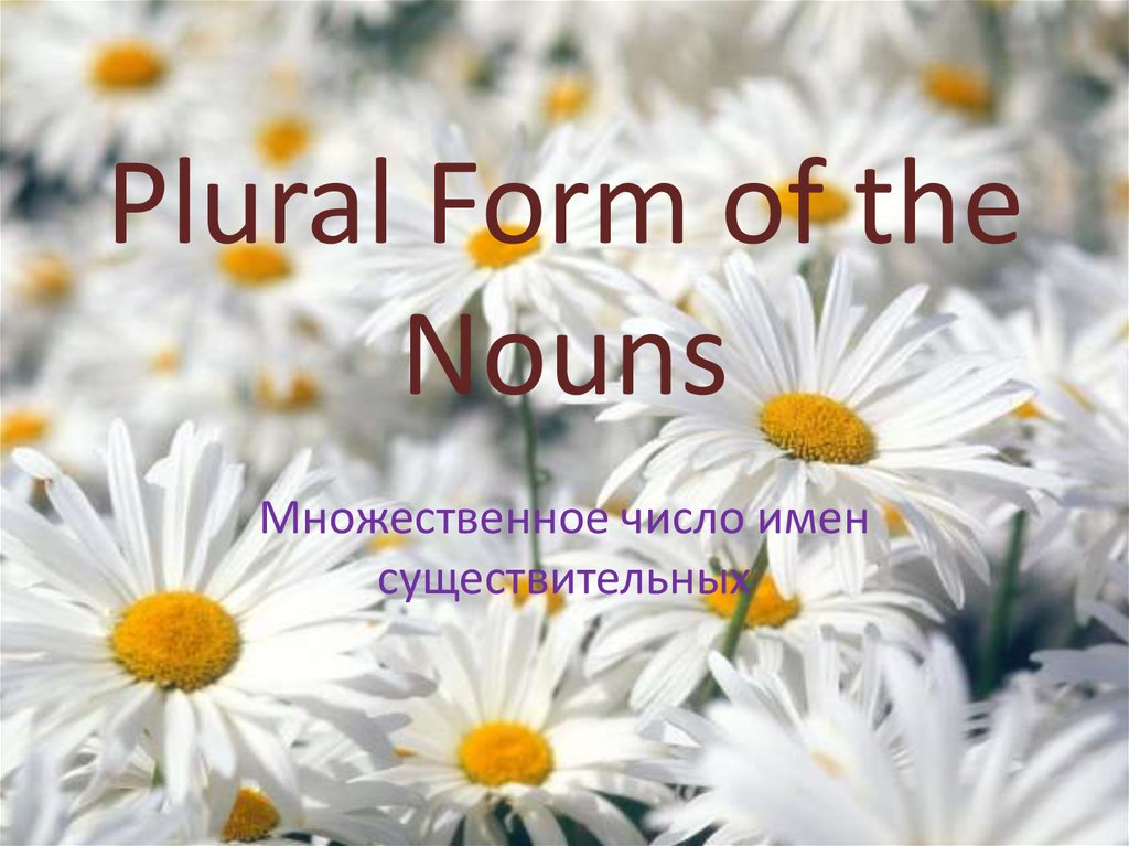 Plural Form of the Nouns