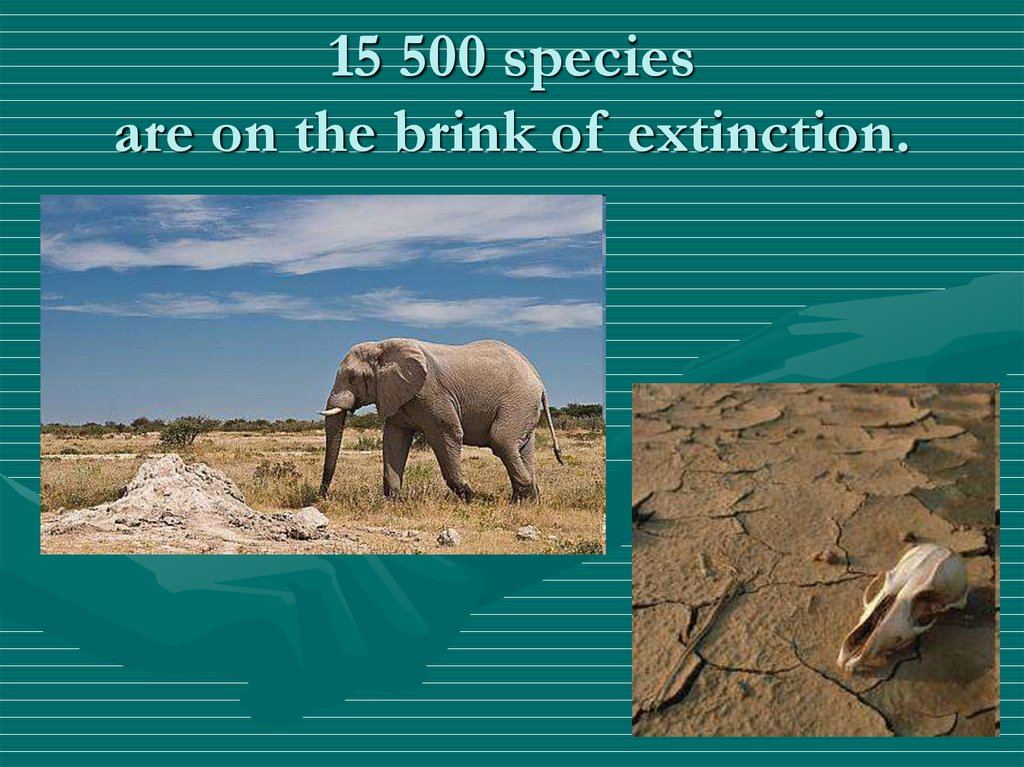 15 500 species are on the brink of extinction.