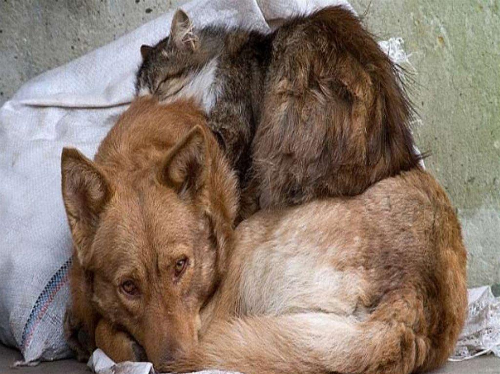 картинки фото привет от бездомного животного скрыть
