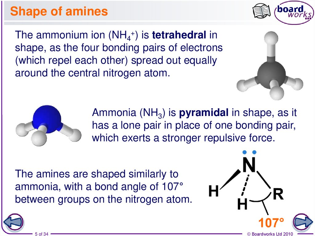 Shape of amines