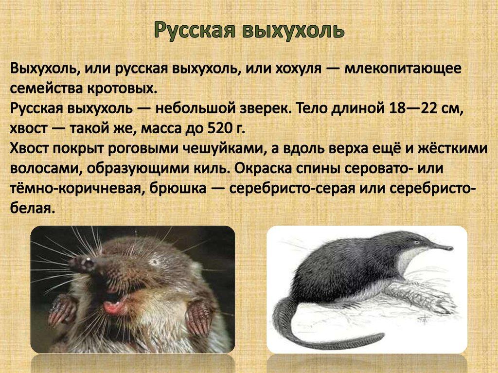 выхухоль фото животного и описание называется