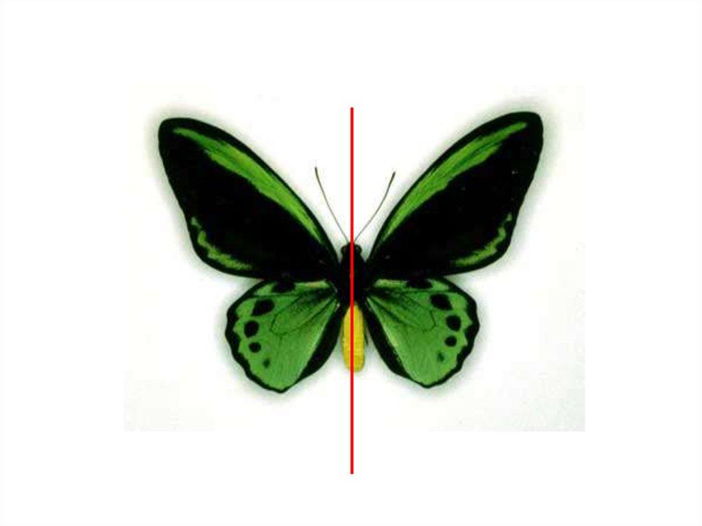 Примеры симметрии в жизни в картинках
