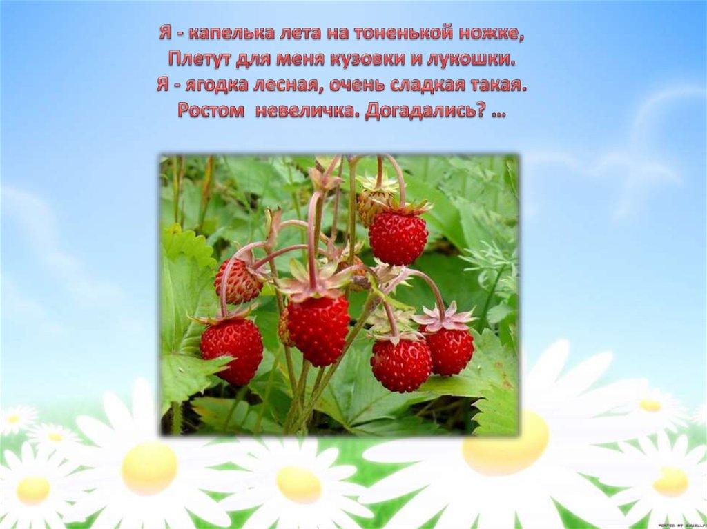 окуните стихи земляничка ягодка моделей