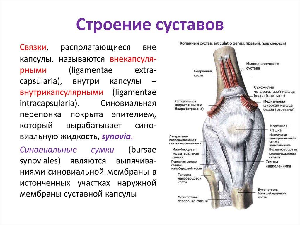 скоро суставы человека картинка правило чекистов работать