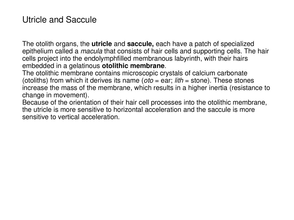 Utricle and Saccule