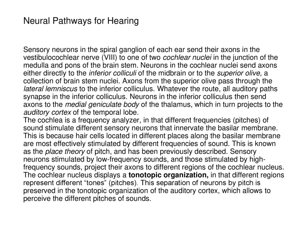 Neural Pathways for Hearing
