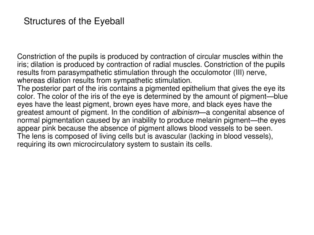Structures of the Eyeball