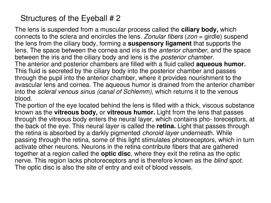 Structures of the Eyeball # 2