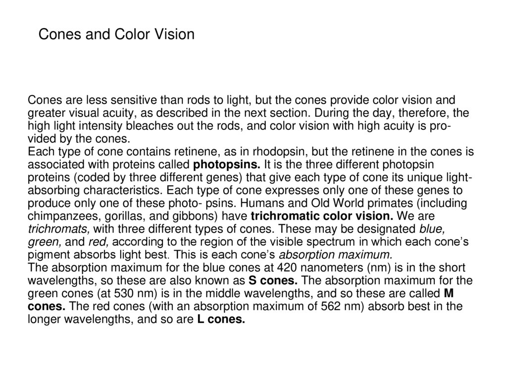 Cones and Color Vision