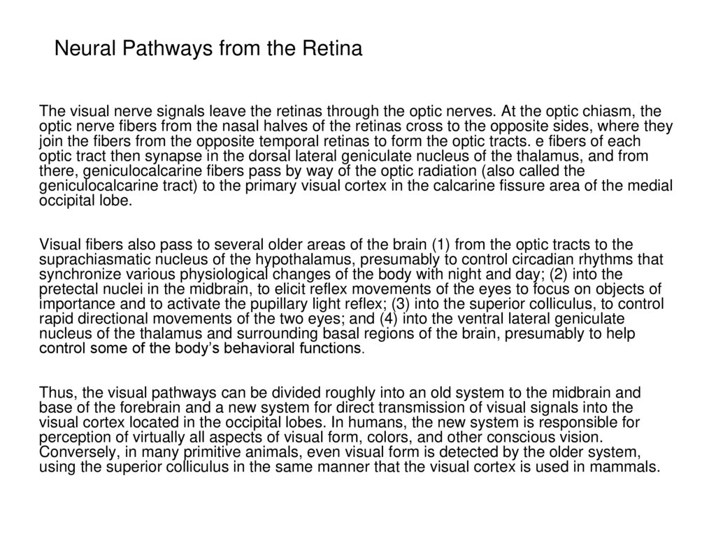 Neural Pathways from the Retina
