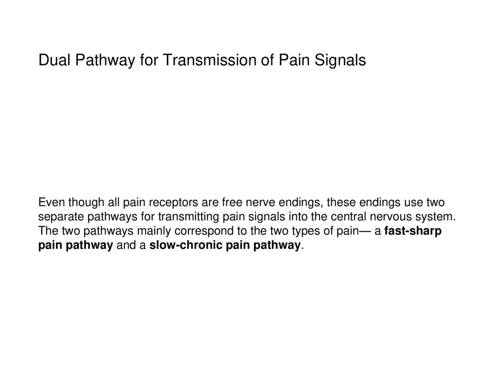Dual Pathway for Transmission of Pain Signals