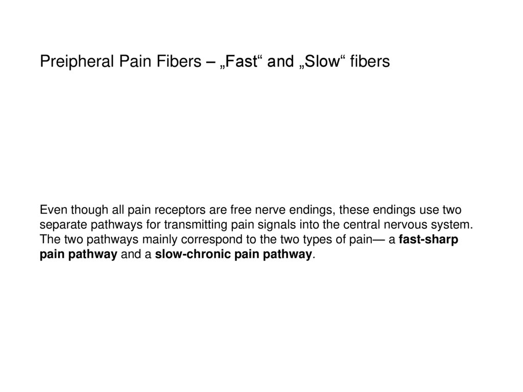 "Preipheral Pain Fibers – ""Fast"" and ""Slow"" fibers"