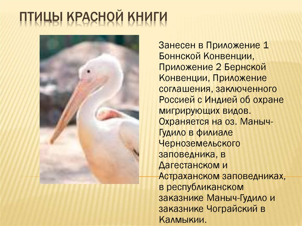 пеледуе все птицы из красной книги с фото пока