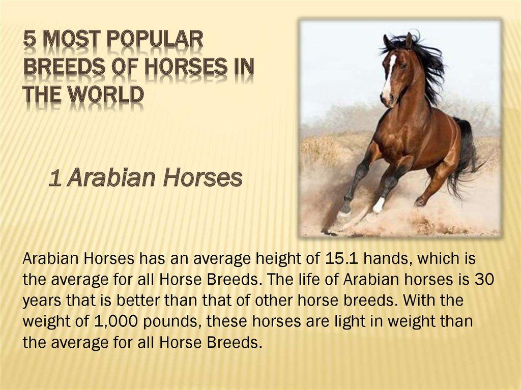 Translation In The Field Of Horse Breeding Online Presentation