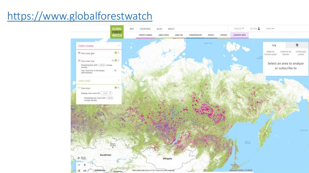 https://www.globalforestwatch