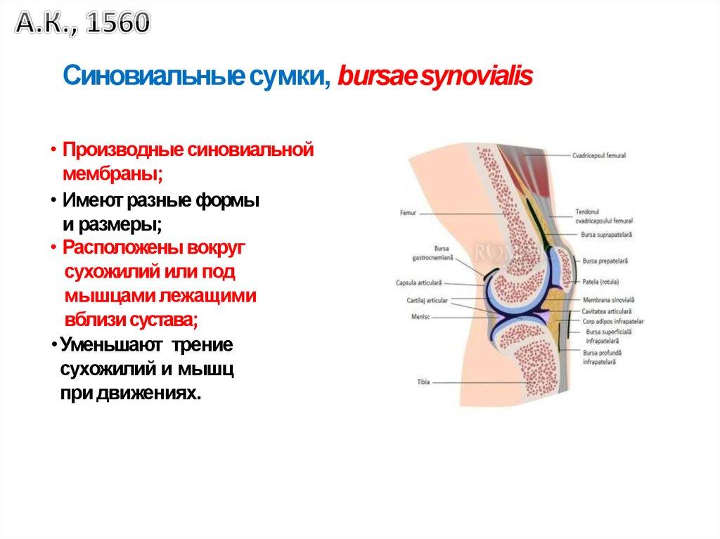 medicina articulară profundă)