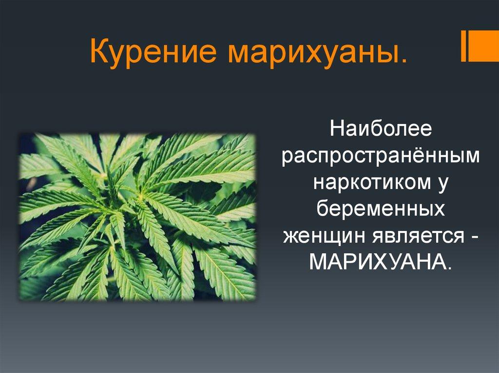 Марихуана и табак вреден или нет срок за хранение марихуаны