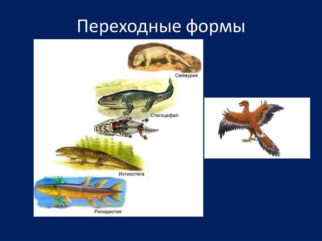 красотки переходные формы животных картинки видели мокриц