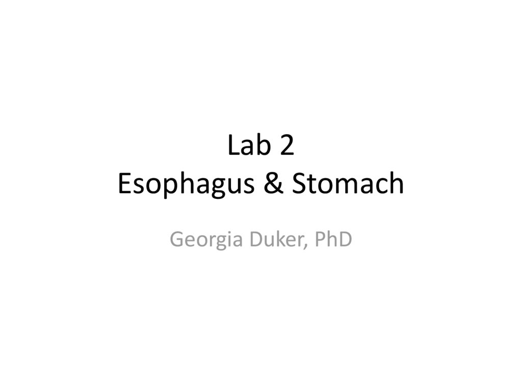 Lab 2 Esophagus & Stomach