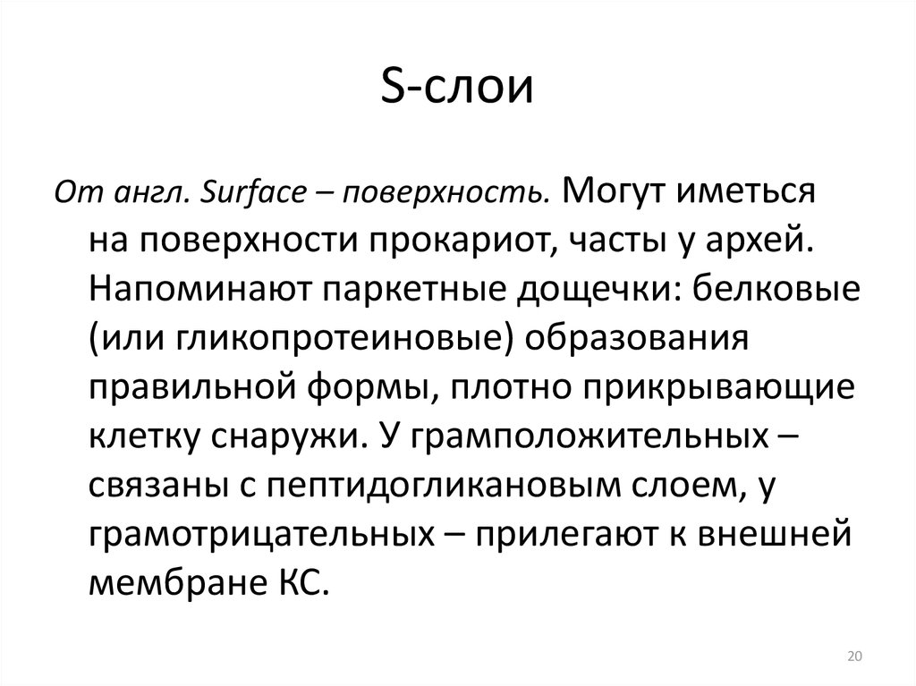 S-слои