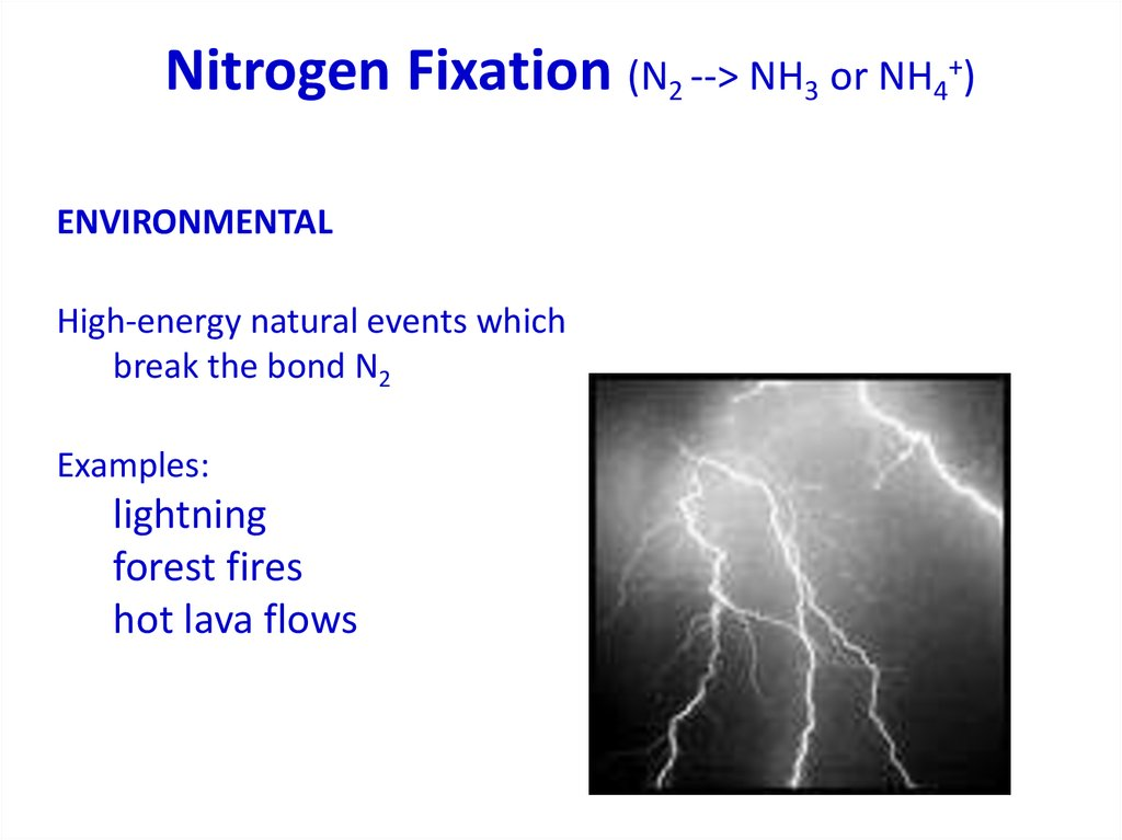 Nitrogen Fixation (N2 --> NH3 or NH4+)