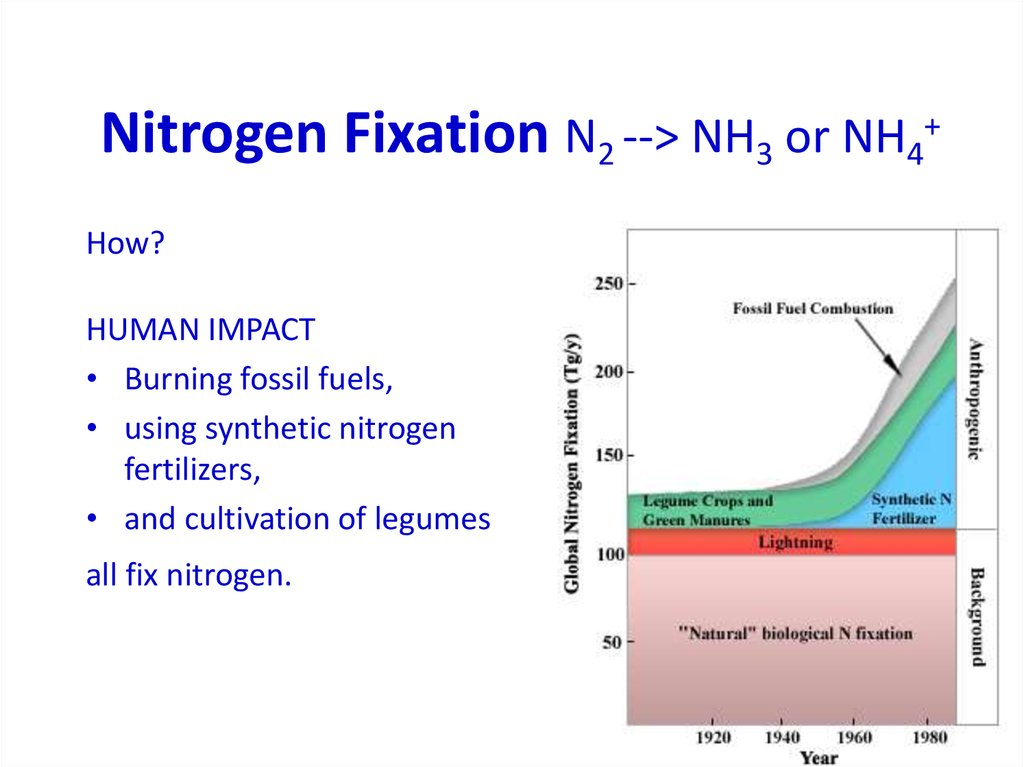 Nitrogen Fixation N2 --> NH3 or NH4+
