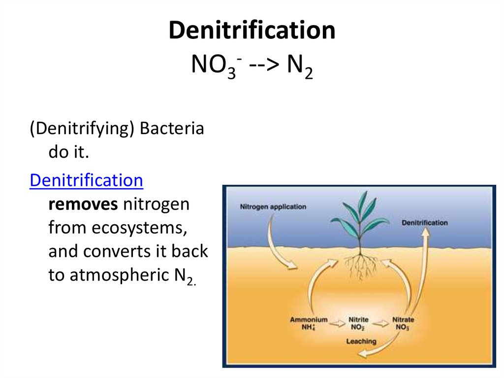 Denitrification NO3- --> N2