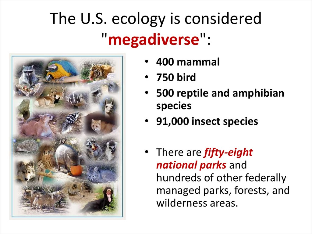 "The U.S. ecology is considered ""megadiverse"":"
