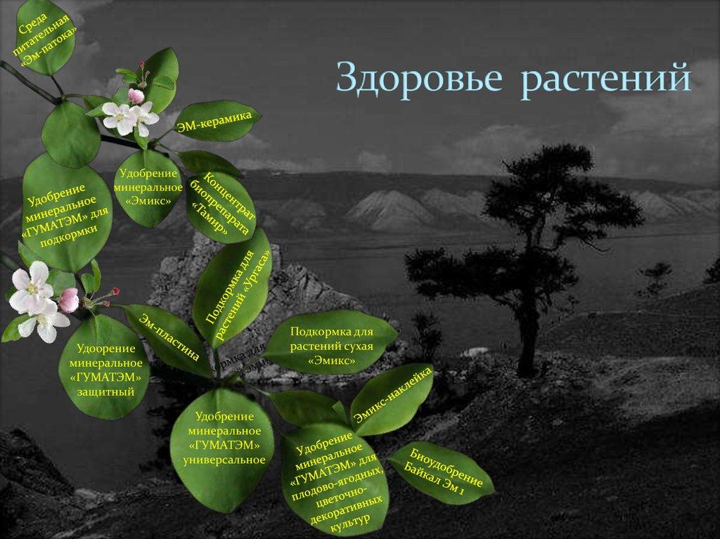 логотип поздравления защита растений потребностей
